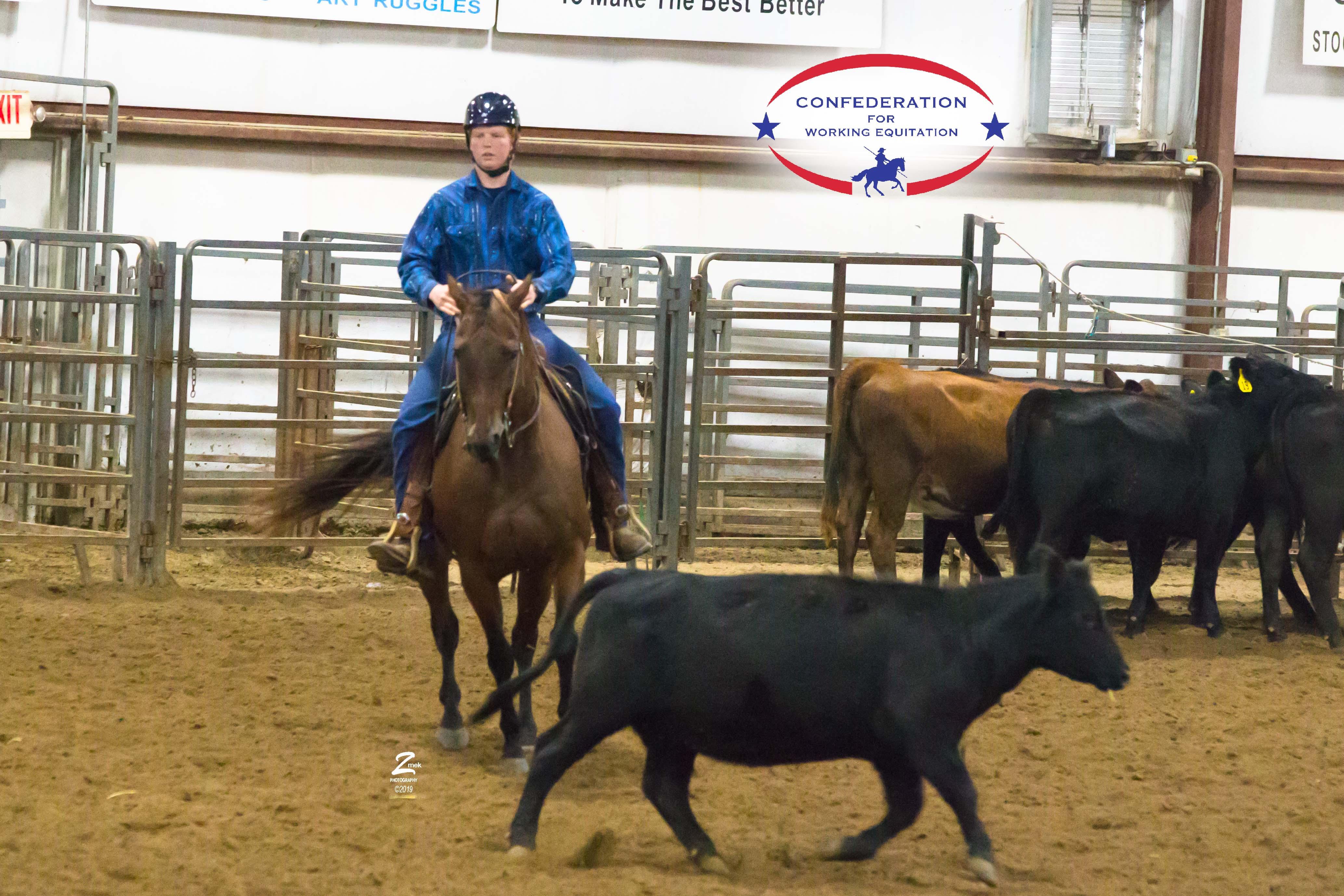 Warren-J-Cattle-0315-v1.jpg