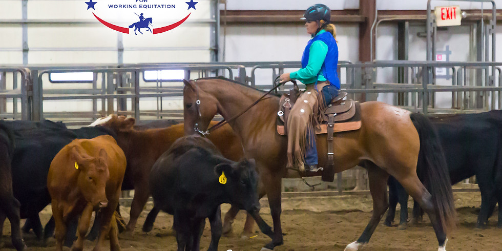 Working Equitation Cattle Clinic