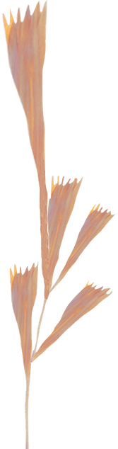 fleur orange.png