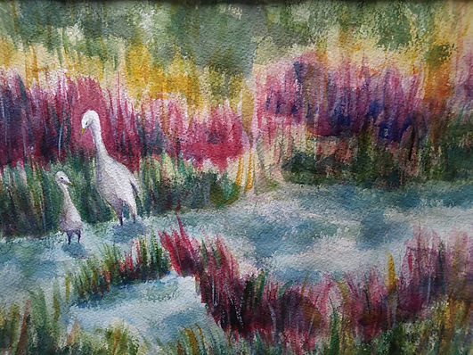 Egrets, Asssateague Island .jpg