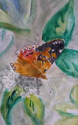 Miss Butterfly.jpg