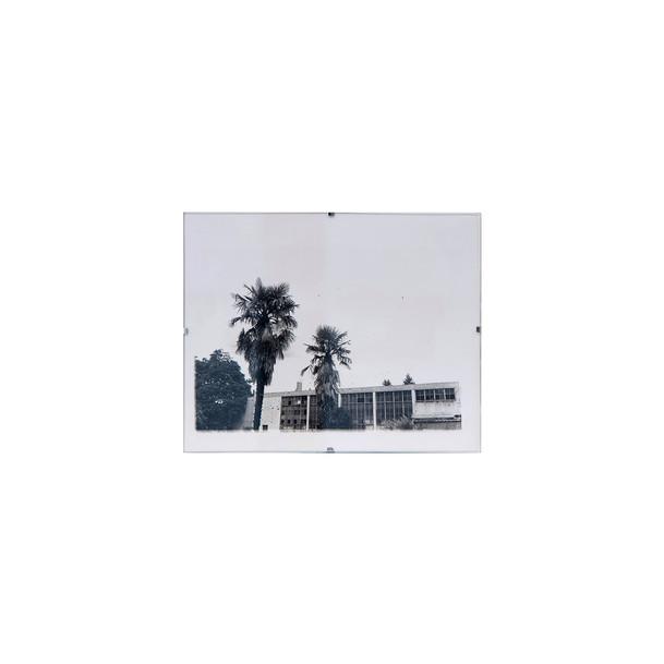 Jaden Chavez - Glenwood Palms, 2020 - Si
