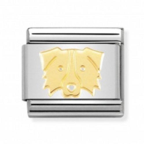 Nomination Gold Border Collie