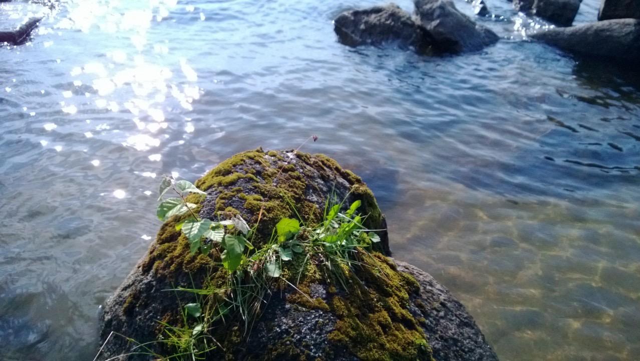 на базе отдыха Медвежий камень