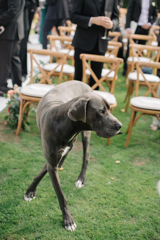 Canine Wedding Guest