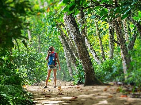 Foto de Costa Rica Bosque.jpg