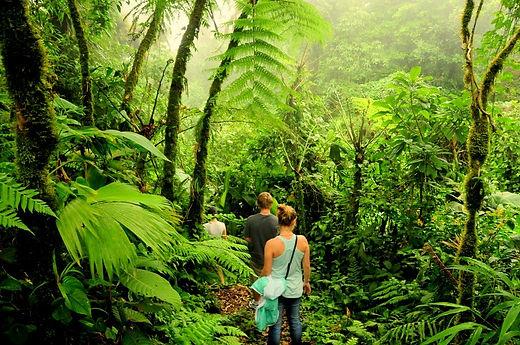 Foto de Costa Rica Monte Verde.jpg