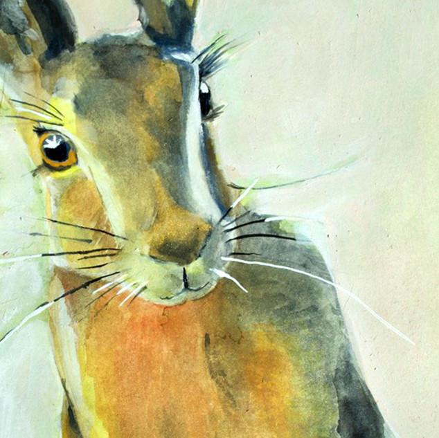Sunshine Hare