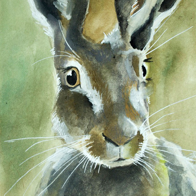 Moss Hare