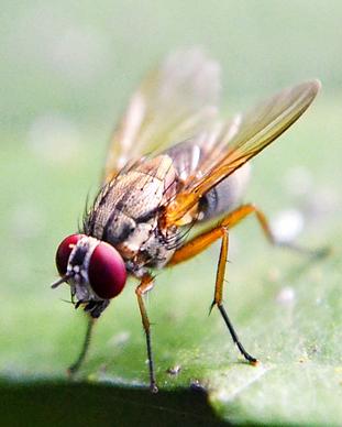 Drosophila Behavioral Neuroscience Reserch Collaboration