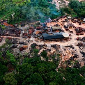 SeeBoundless Utiliza Blackmagic eGPU Pro para criar modelo 3D da Floresta Amazônica