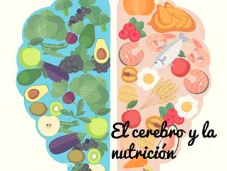 El cerebro y la nutrición