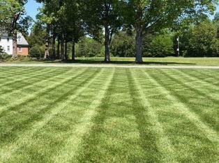 grass walker.JPG