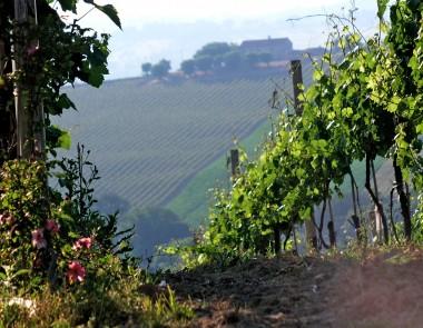 Monte Schiavo 5