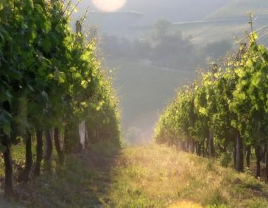 Monte Schiavo 3