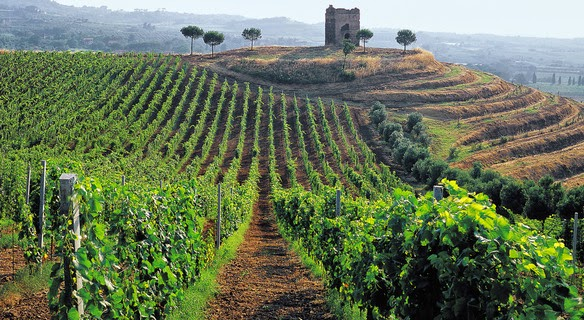 Lazio+Vineyard