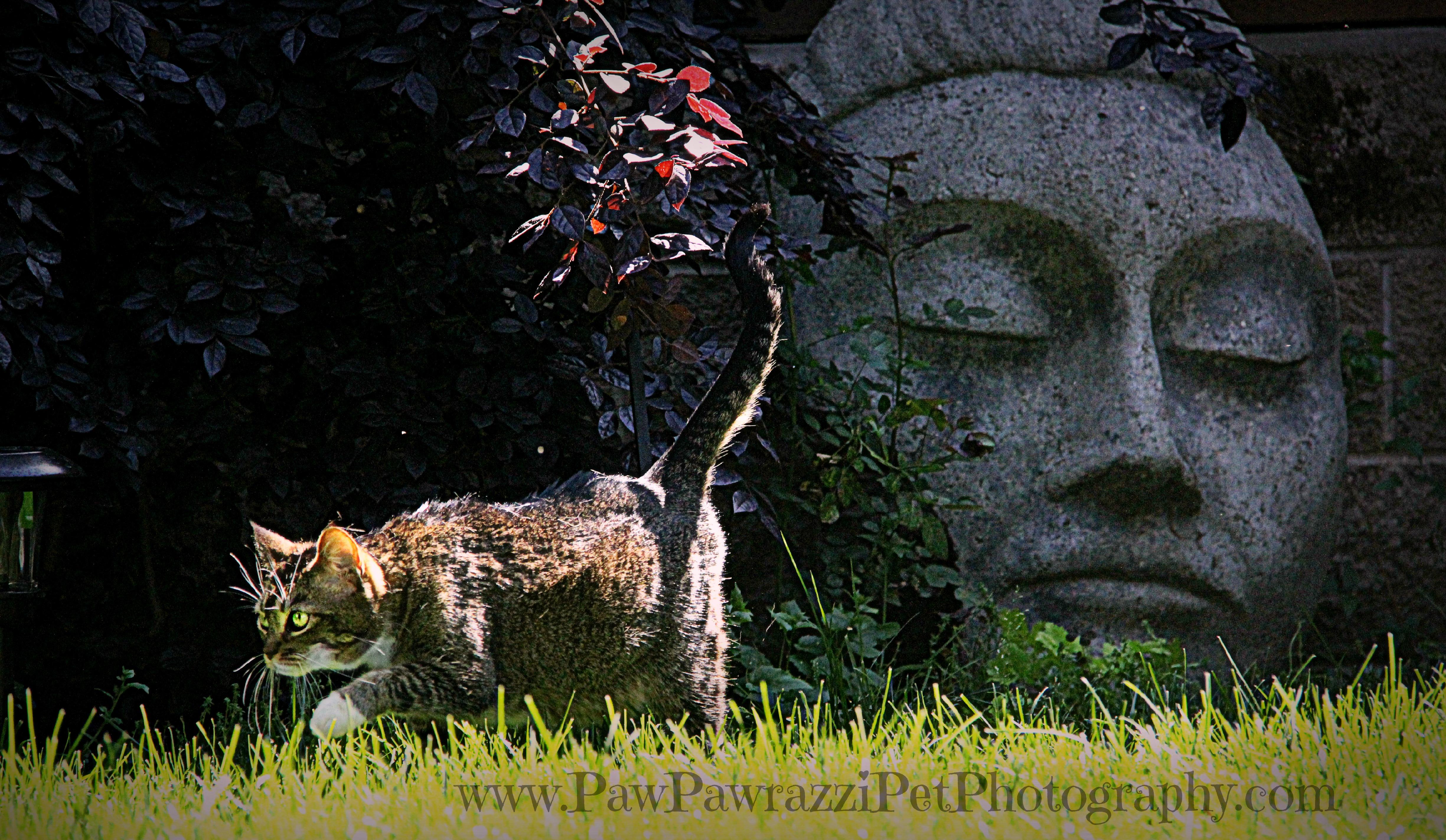 Buddha Cat