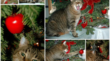 🐾 My Best Tips for Christmas Tree 🎄 and Cat 🐱 successful cohabitation!