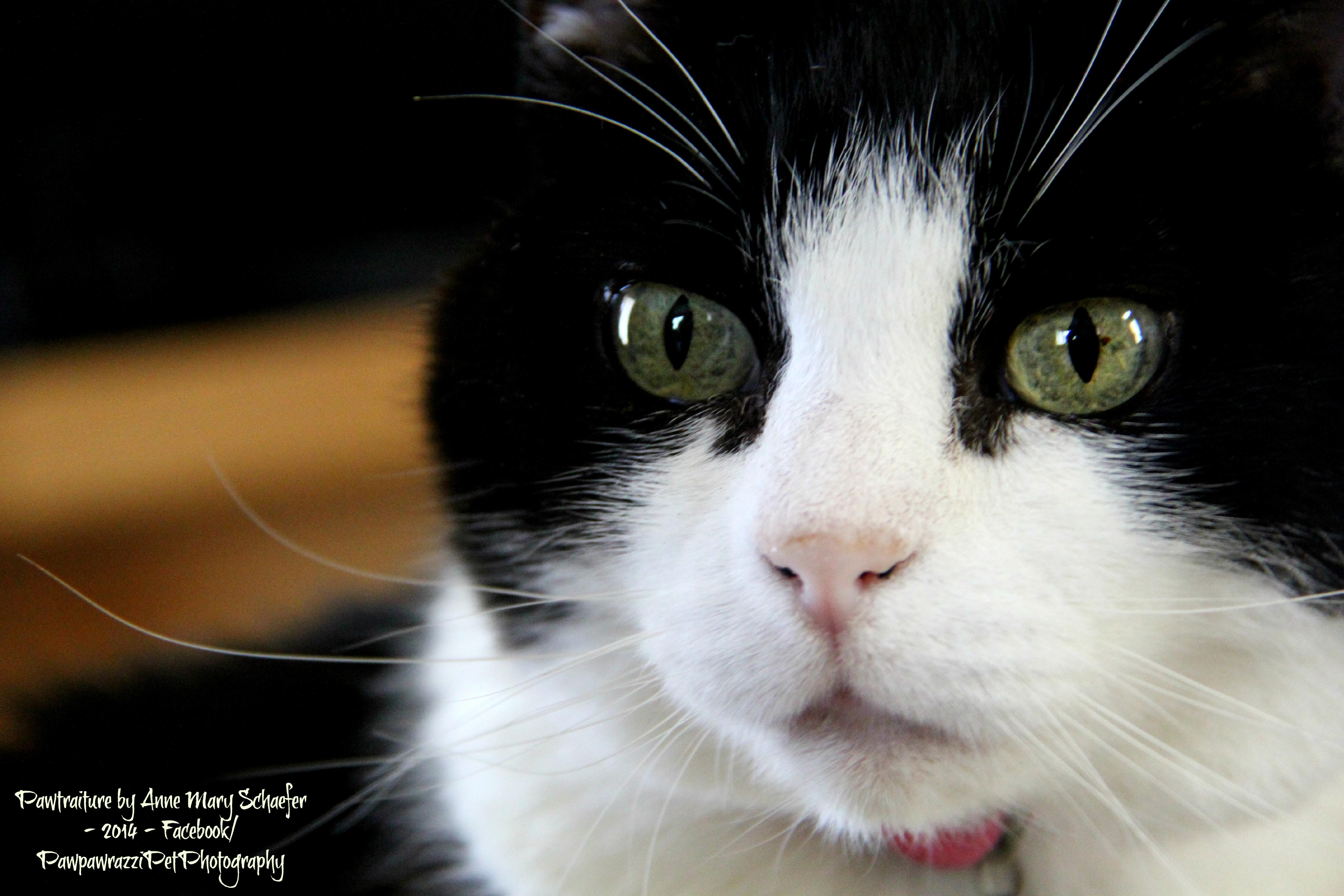 Ava Gardner, the Cat
