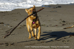 I got the stick!