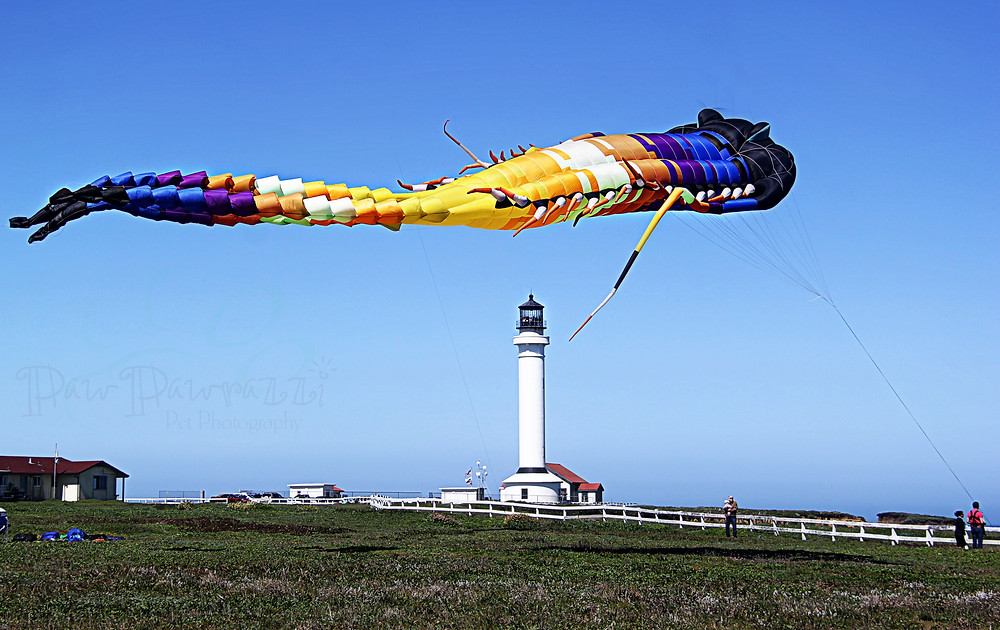 Berkeley Kite Wranglers' giant kites filled the sky Here, a Trilobite is about to devour the Lighthouse!