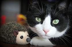 Winston and his Hedgehog