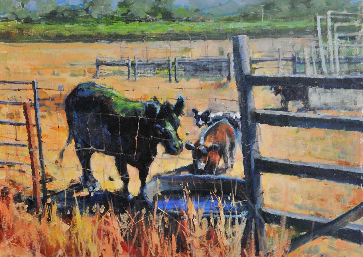 Brocco's Cows