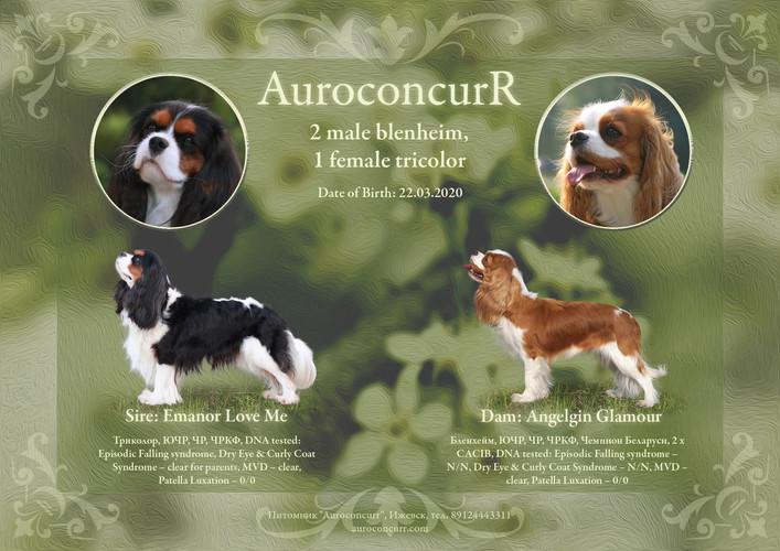 Auroconcurr_march_2020_02.jpg