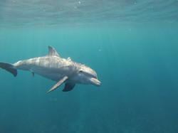 22.04.2014 dolphin 076