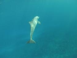 22.04.2014 dolphin 073