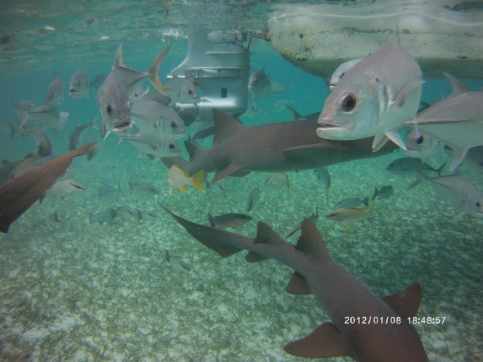 HolChan SharkRay & Counch GraveYard Tour