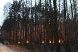 В Министерстве природопользования прокомментировали пожар в лесу под Рязанью