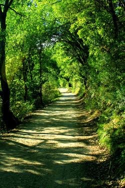 Le Chemin de Babaou
