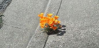 Fleur symbole de résilience