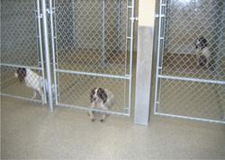 dog-kennel-1