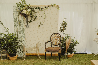 Backdrop _ Wall _ Drape _ Chair _ Plants