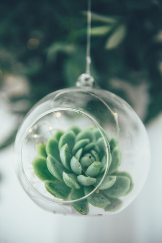 Glass Globe and Succulent