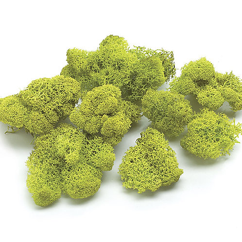 Reindeer Moss -16oz Bag
