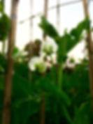 col morada ecológica