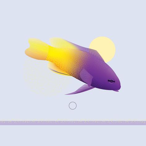 PurpleFish.jpg