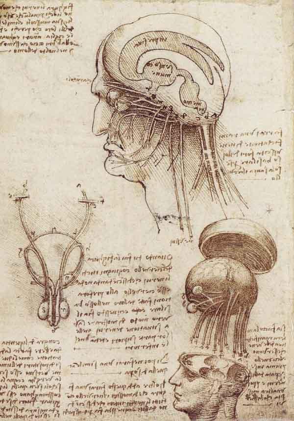 Le cerveau selon Leonardo Davinci