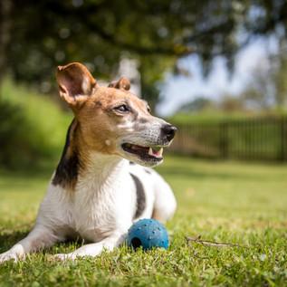 Hunde Portrait 3