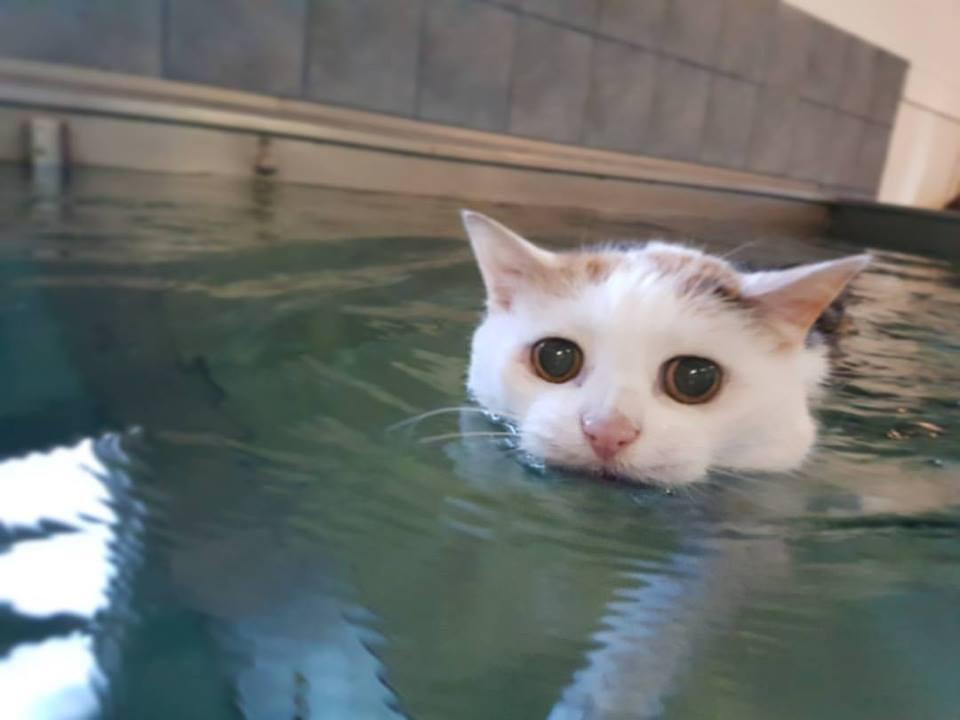 Rhonda Swimming.jpg