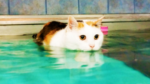 Rhonda Swim.jpg