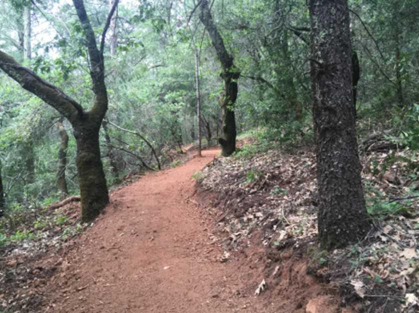 Calistoga Estate Trail