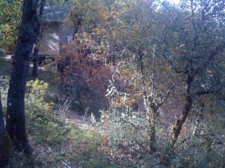 Auburn, CA Trail - Before