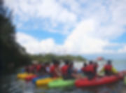 Mangrove Kayaking_edited.jpg