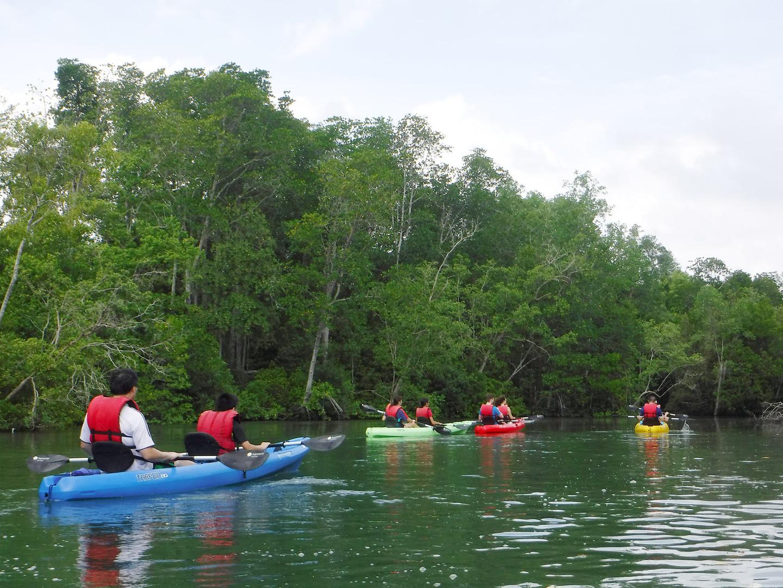 Pulau-Ubin-Adventures-Mangrove-Kayaking-