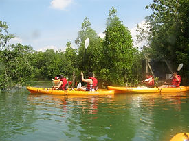 Ubin Bisect Kayaking_edited.jpg
