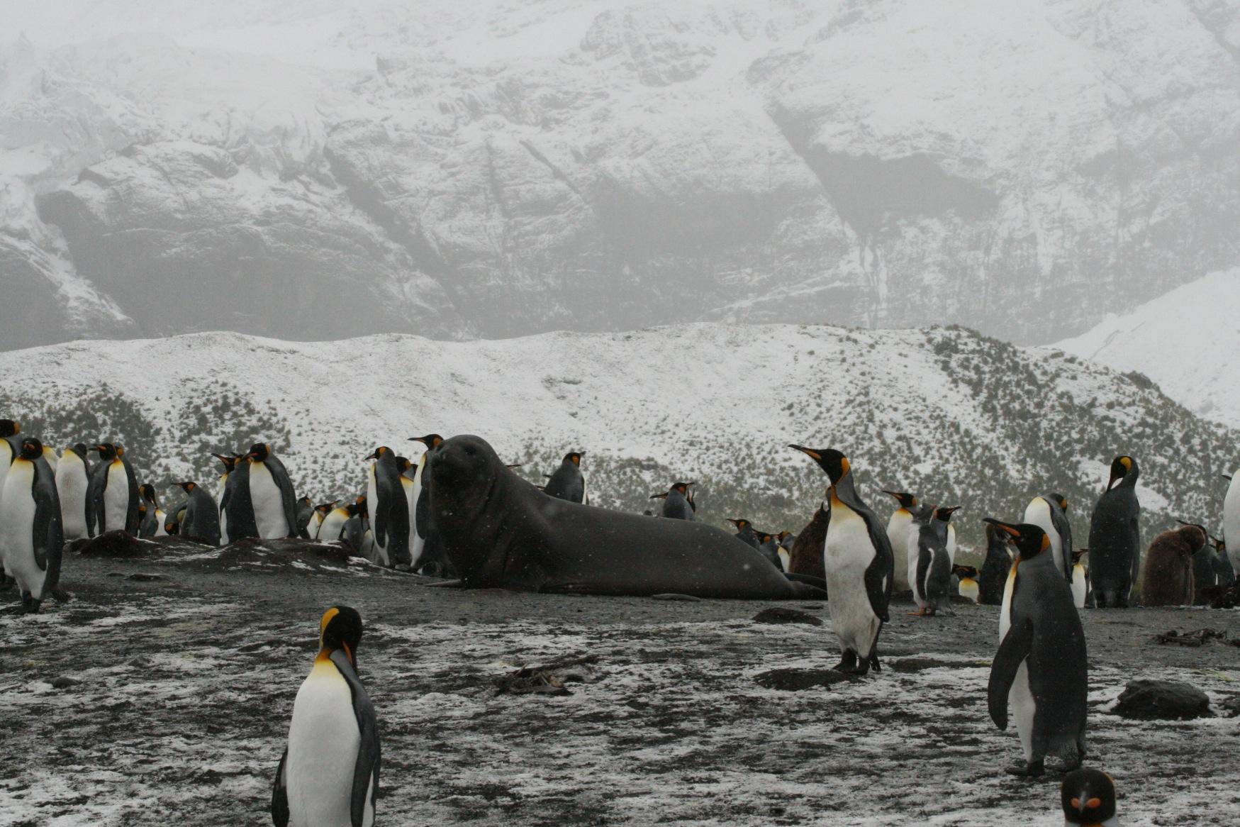 Falklands Yeah.jpg